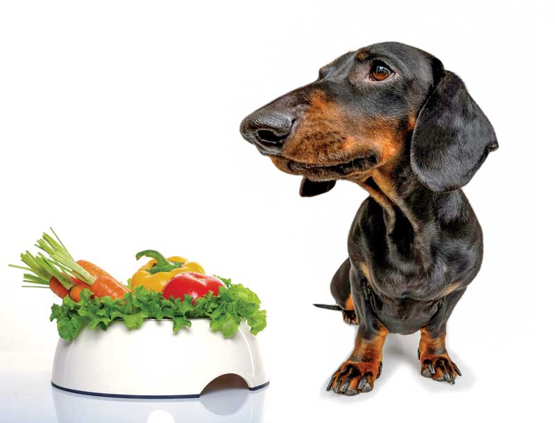 Black and brown Dachshund standing next to white bowl of vegetables