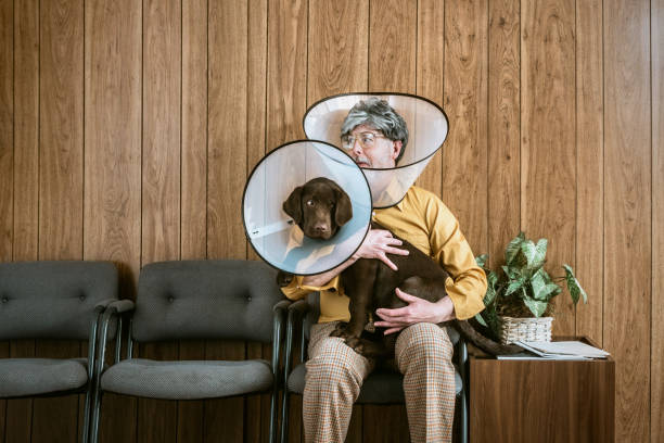 Man at Veterinarian Wearing Dog Cone A man and his puppy dog sit in the waiting room at a veterinary clinic, both of them wearing a dog cone collar to prevent from scratching and itching at fleas.  Retro styled room and clothing.  Horizontal image with copy space. dog itch stock pictures, royalty-free photos & images