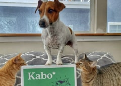 Jack Russell Terrier standing high and mighty ontop of a Kabo delivery box with cats sniffing around the box
