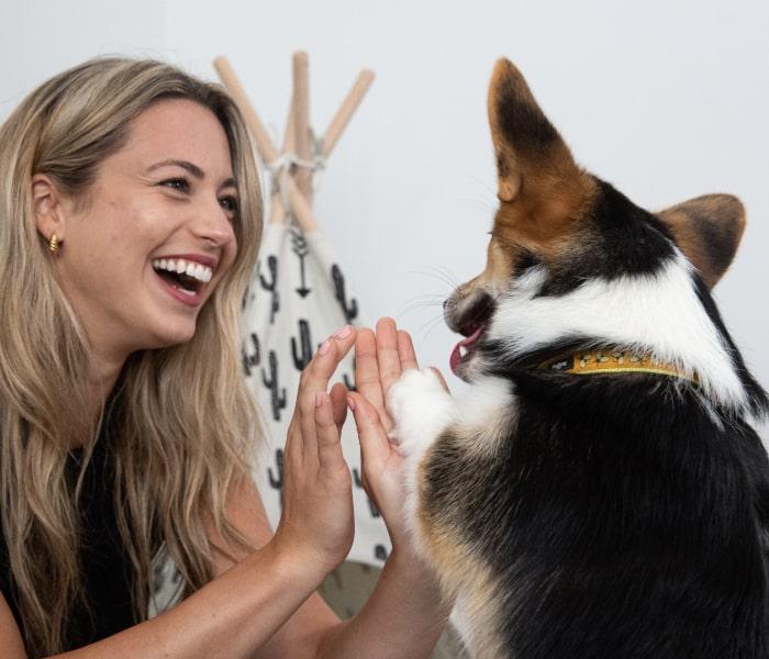 Female dog owner smiling giving her corgi high fives