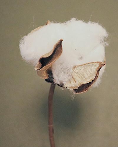 organic cotton sustainable fashion