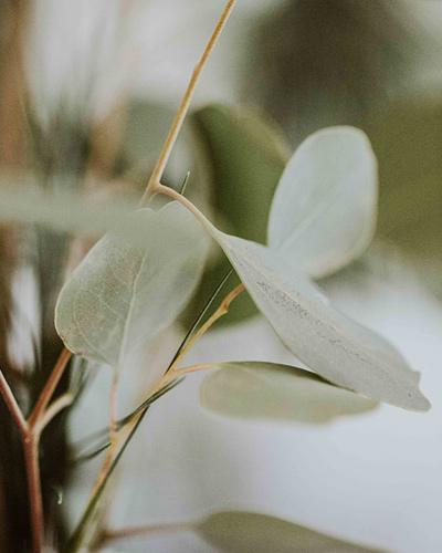 tencel plant