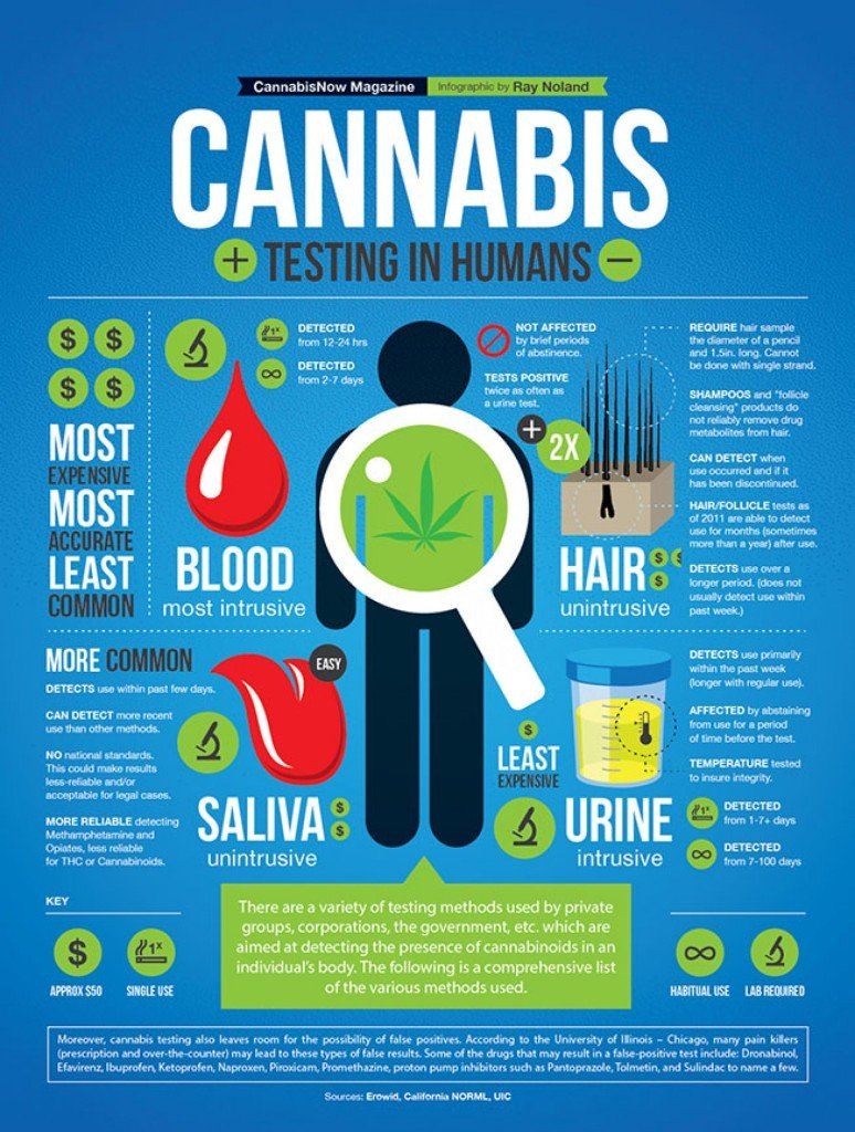 http://visual.ly/cannabis-testing-humans