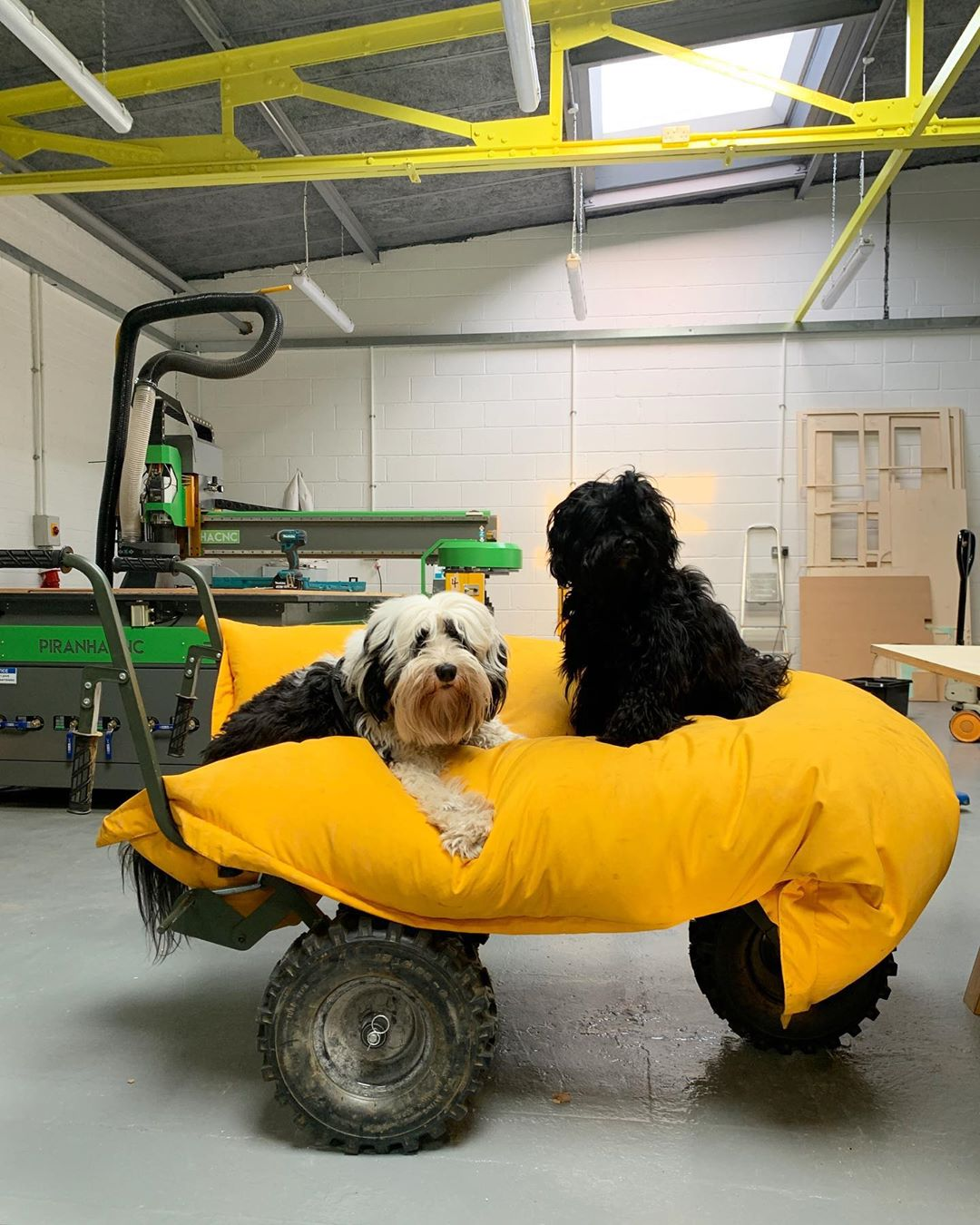 Our studio dogs, Mr.Scruff and Annie Mac!
