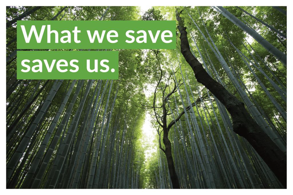 """Image of the first stage of building a postcard with an appealing headline: """"what we save, saves us"""""""