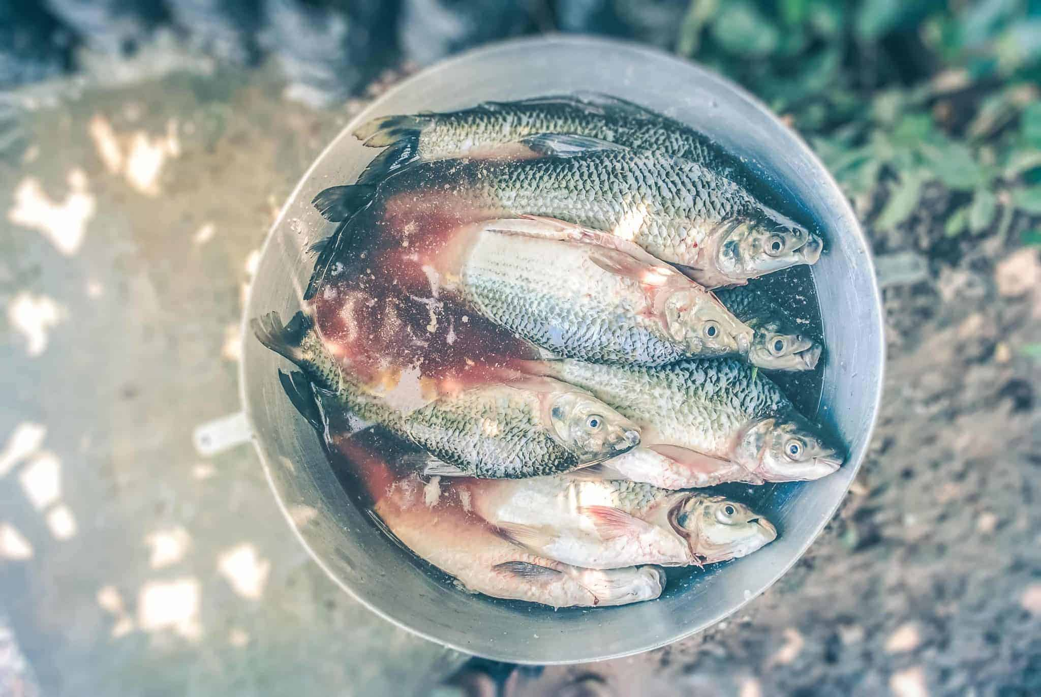 Image of a bucket of fish.
