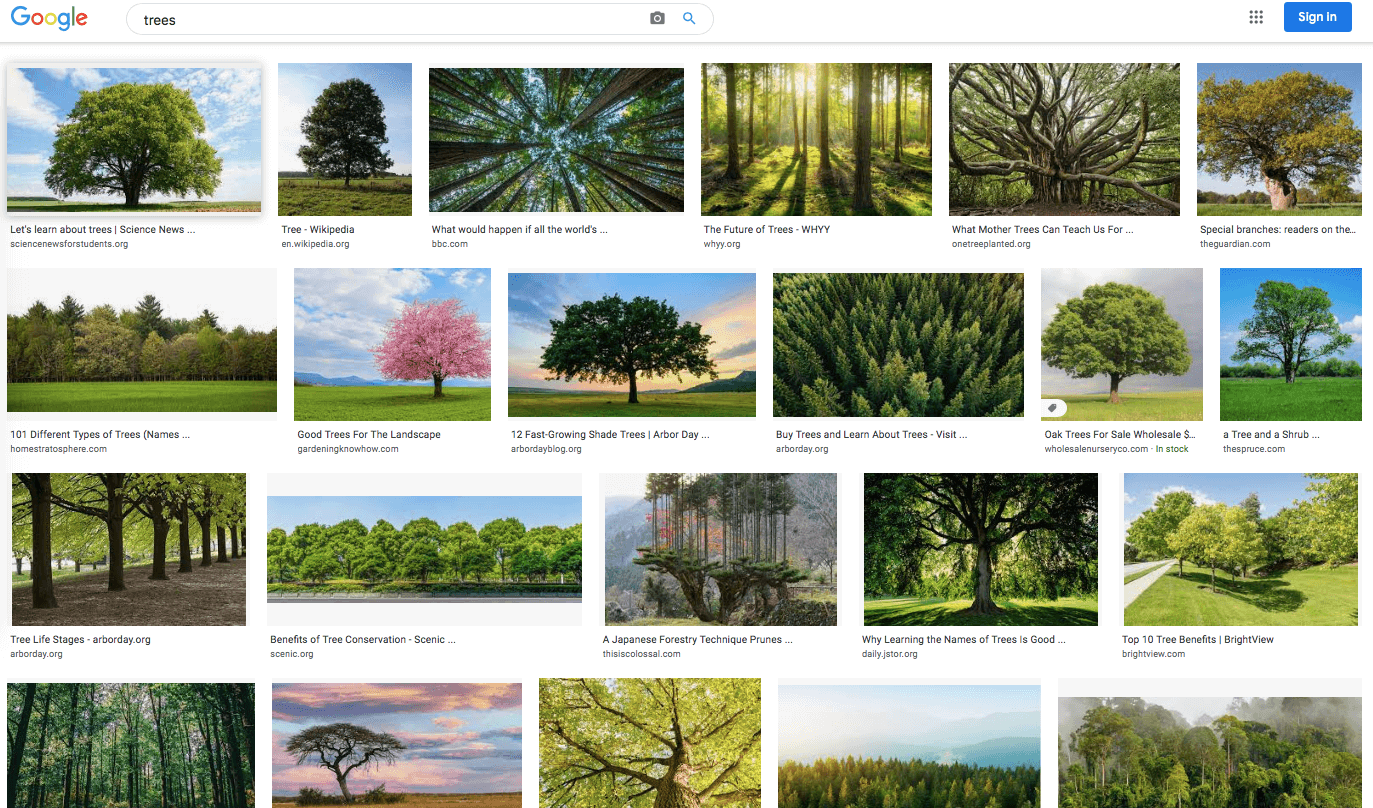 Google images of trees