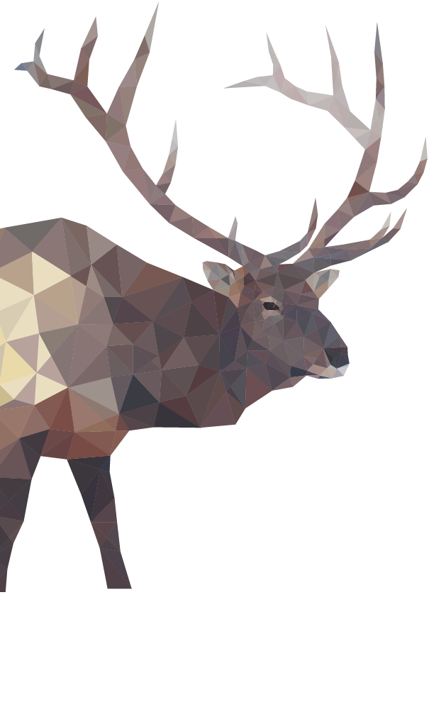 Elk Illustrated