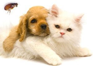 prevention-of-pet-from-fleas