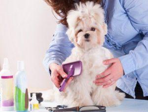 DIY Dog gromming tips