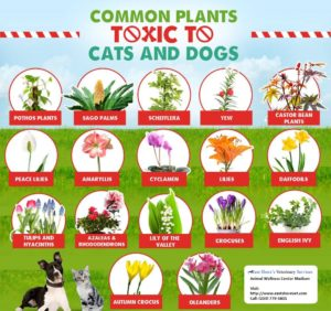 toxic plants for dogs & cats