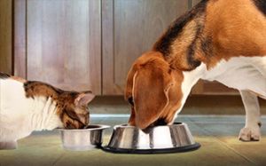 pet feeding tips