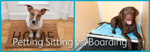 Pet Sitting Vs Pet Boarding