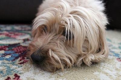 dog wellness center