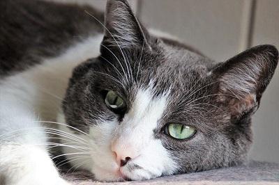 dull cat | vet