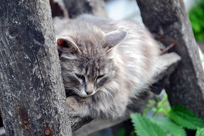 cat sleeping in the tree | animal hospital in madison