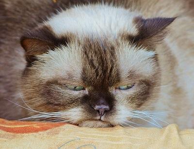 Sleeping cat | animal wellness center in Branford