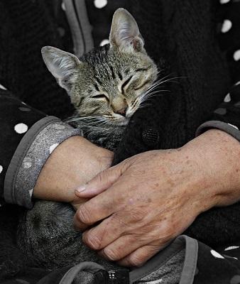 black sleeping cat | cat boarding center