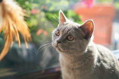 white cute cat | animal wellness center