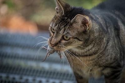 angry cat | east shore vet