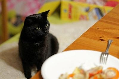 black cat seeing