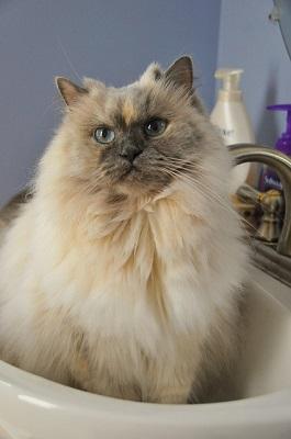 cute cat | pet caring center