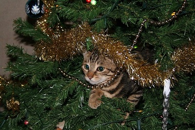 Cat hidden in the christmas tree | East shore vet