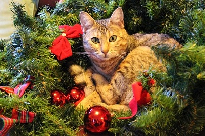cat with christmas tree| Animal wellness center