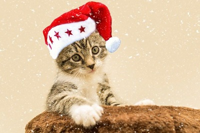 cute cat with red cap | dog boarding center