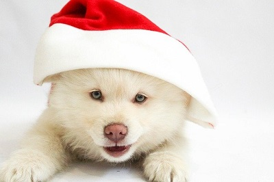 White dog | Pet wellness center