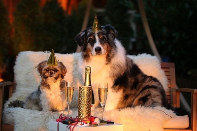 cat and dog celebrating new year | East shore vet