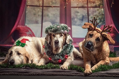 dogs celebrating x-mas