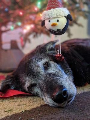 Black dog | animal wellness center