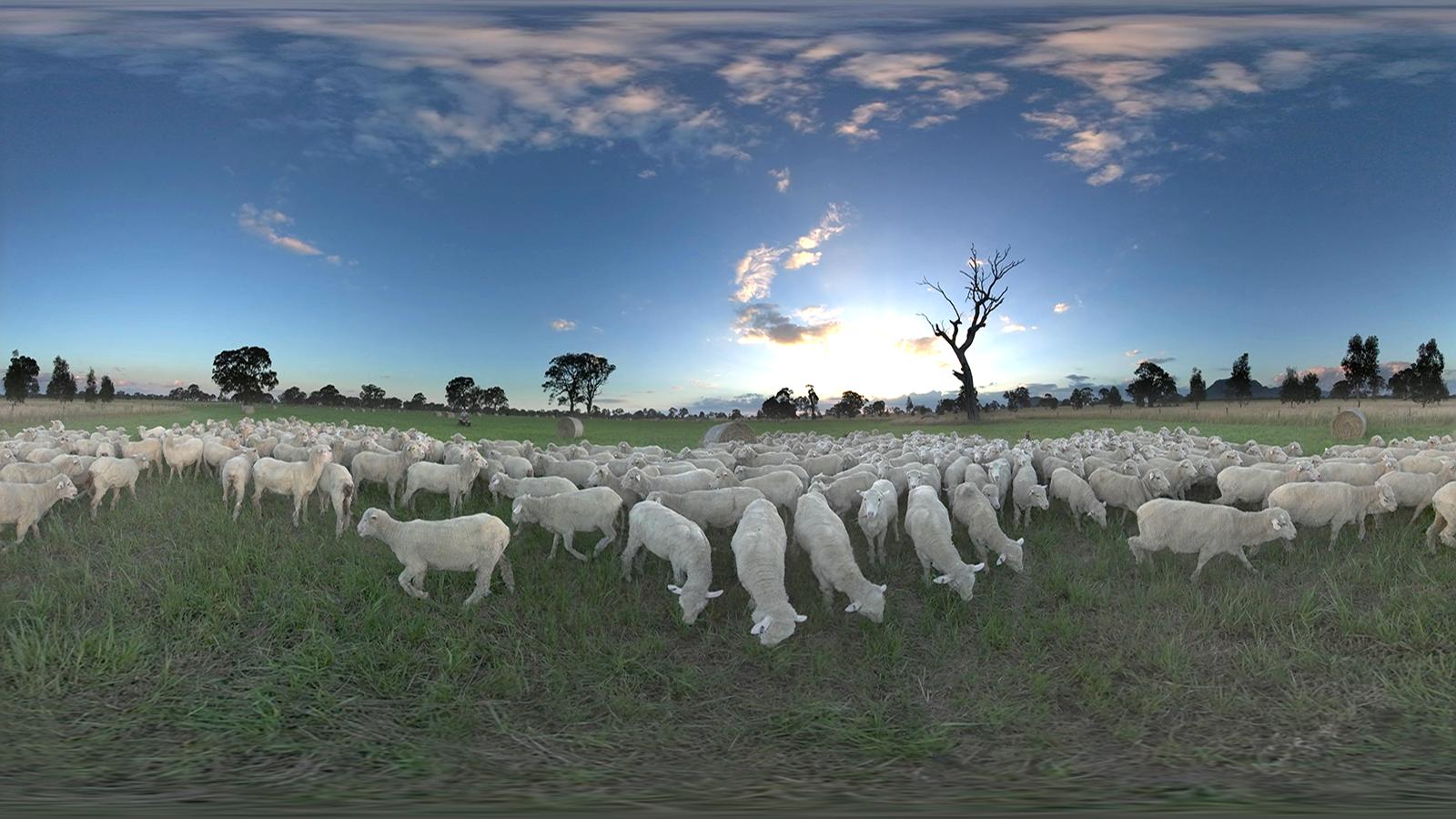 Woolmark VR Menu project screenshot 01