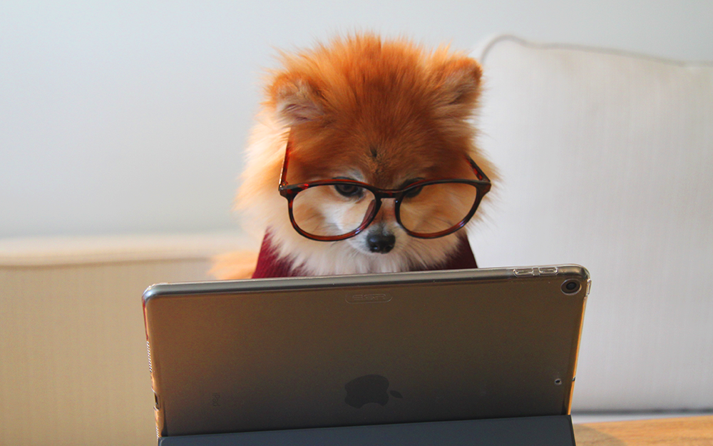 dog, computer, glasses, learning, video, photo