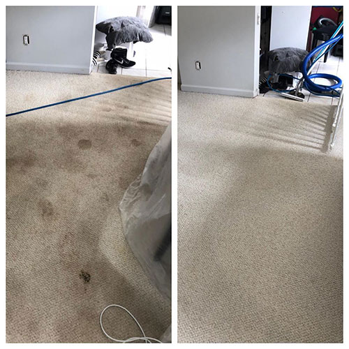 carpet cleaning before and after vancouver