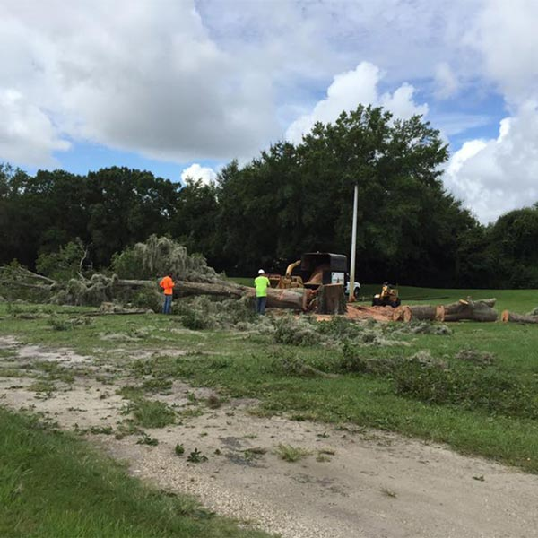 Lot and land clearing in Orlando, FL
