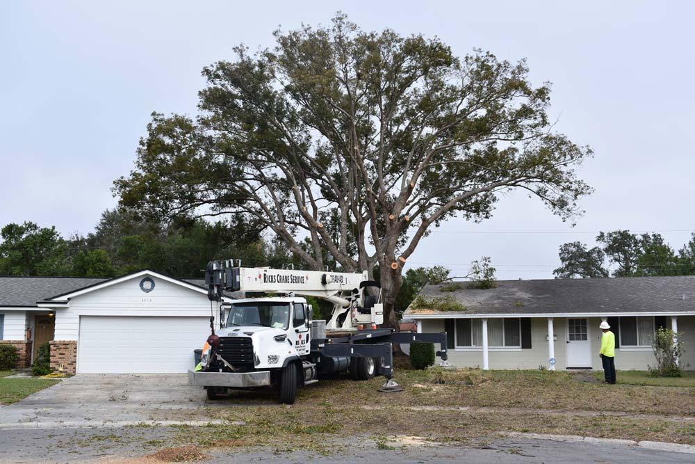 Tree Services in Orlando, FL