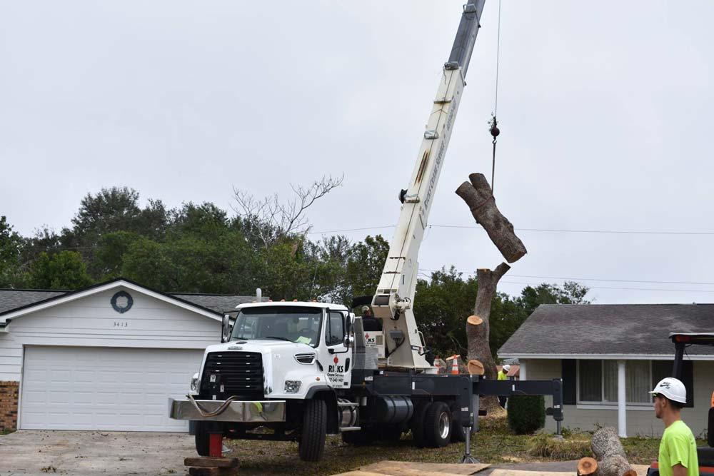 Tree removal in Orlando, FL