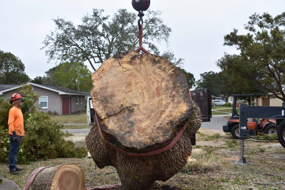 Stump grinding and removal services in Orlando, FL