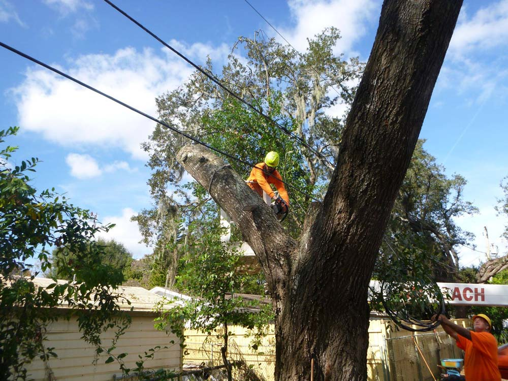 Kevin's Tree Service in action in Orlando, FL