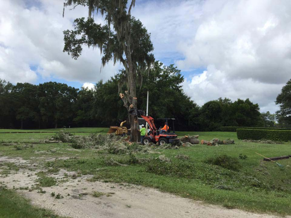 Lot clearing in Orlando, FL