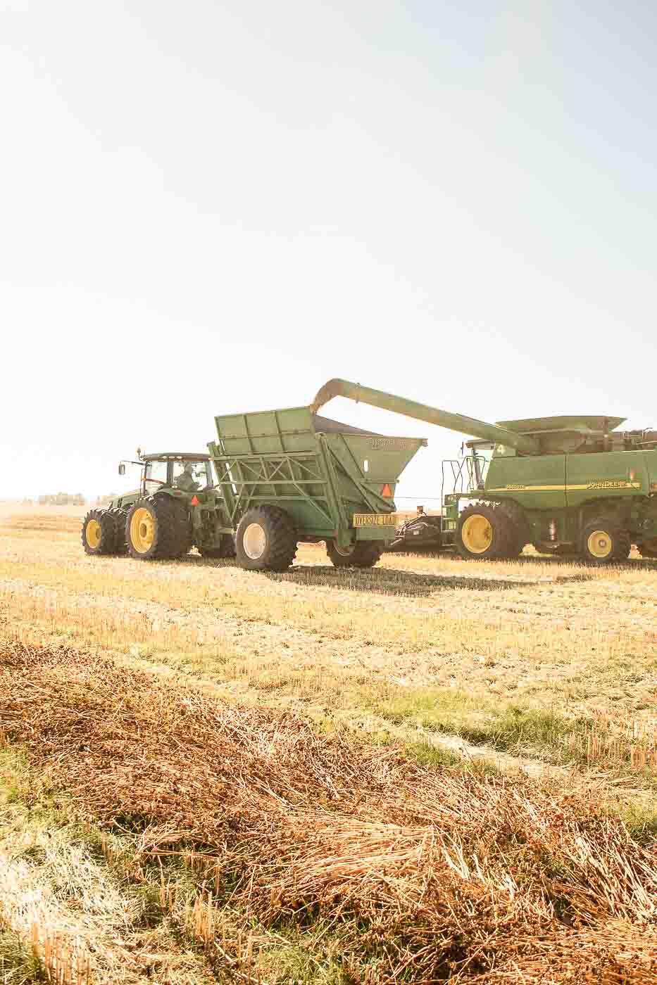 Buckwheat Harvest