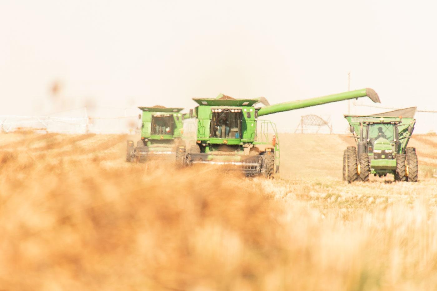 Victory Farms Harvesting