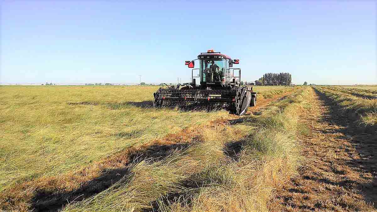 Swathing Victory Farms