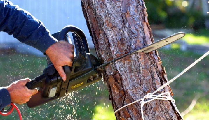 tree-removal-service