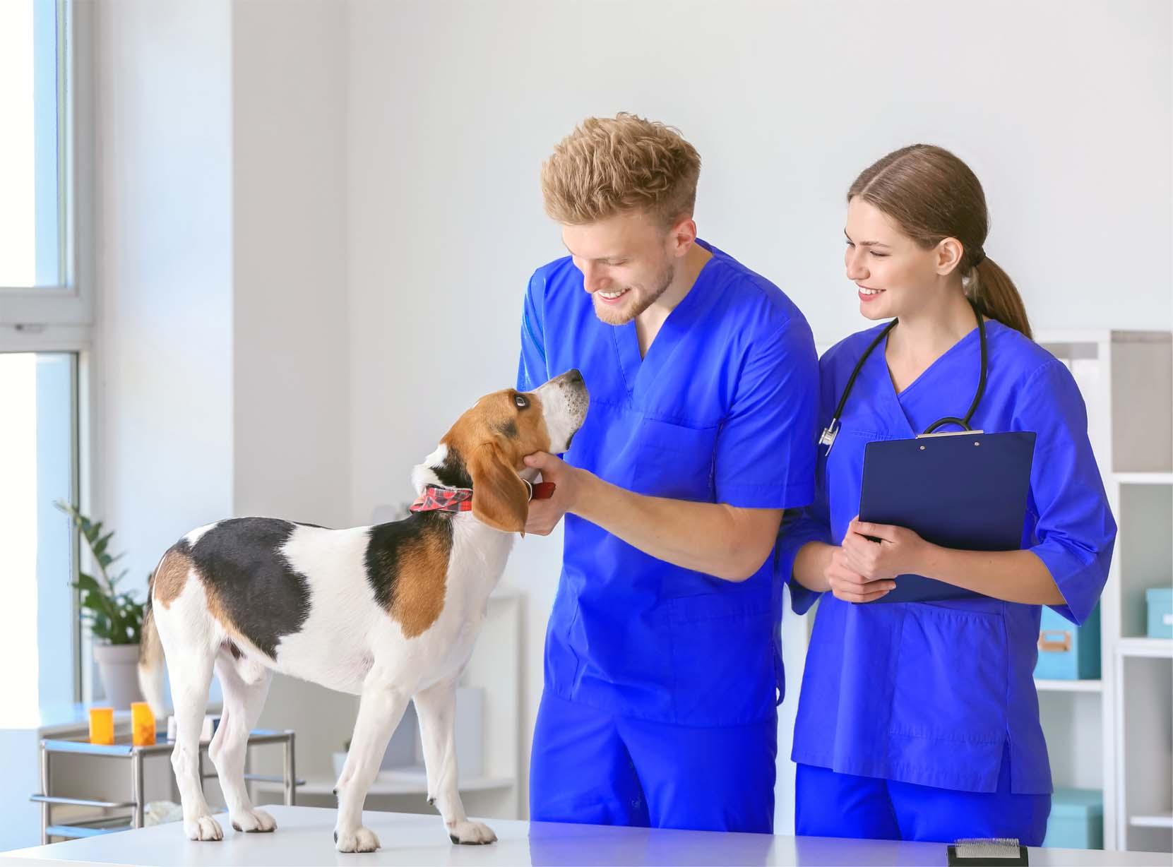 veterinary telephone answering service