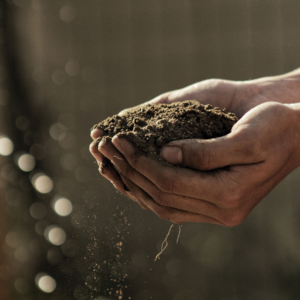 Closeup photo of a person holding soil in their hands.