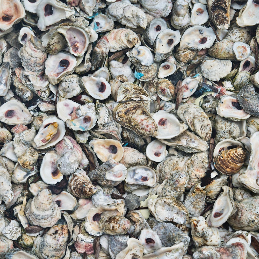 Photo of oyster shells.