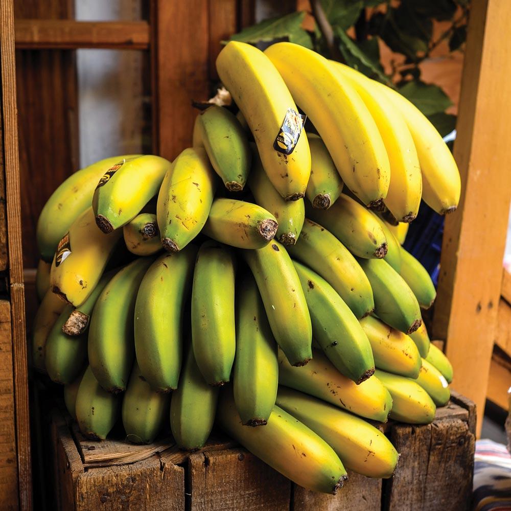 Photo of bananas.